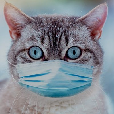 Pet CAT found to have 'virus' in UK - watch for this theme because bringing animals into this hoax is part of the plan