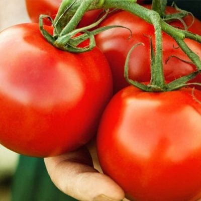 Scientists Are Growing Genetically Modified Tomatoes As Edible Coronavirus Vaccine