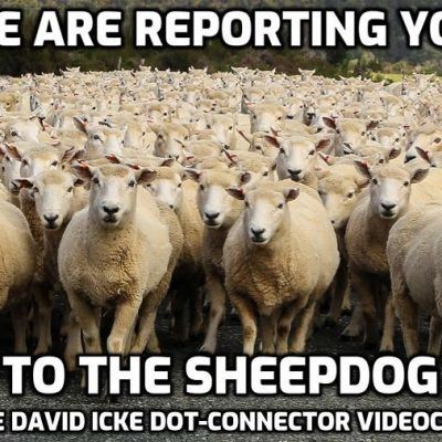 We Are Reporting You To The Sheepdog - David Icke Dot-Connector Videocast (Please Share To Combat Censorship)