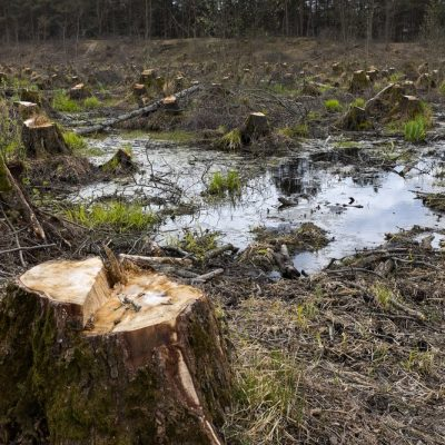 Environmentalists Cause Environmental Disaster In Europe