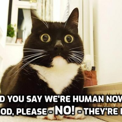 We're all meowing cats now - the world in 2021